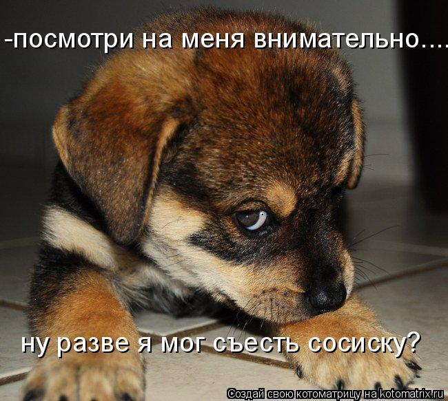 Котоматрица: -посмотри на меня внимательно.... ну разве я мог съесть сосиску?