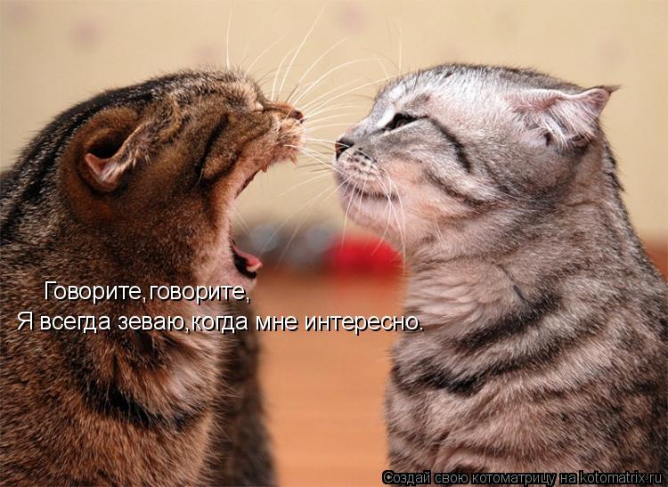 Котоматрица: Говорите,говорите, Я всегда зеваю,когда мне интересно.