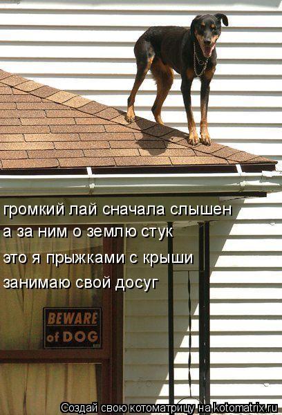 Котоматрица: громкий лай сначала слышен а за ним о землю стук это я прыжками с крыши занимаю свой досуг
