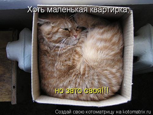 Котоматрица: Хоть маленькая квартирка, но зато своя!!!