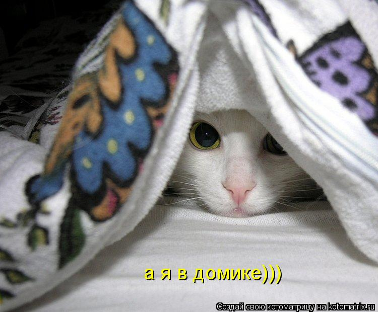 Котоматрица: а я в домике)))
