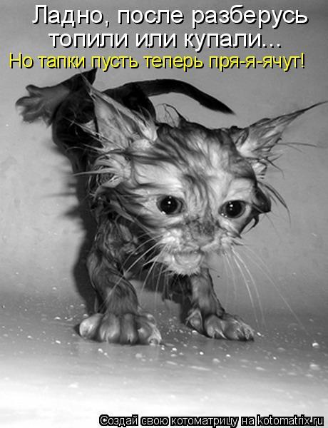 Котоматрица: Ладно, после разберусь  топили или купали...  Но тапки пусть теперь пря-я-ячут!