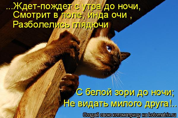 Котоматрица: ...Ждет-пождет с утра до ночи, Смотрит в поле, инда очи , Разболелись глядючи  С белой зори до ночи;  Не видать милого друга!..