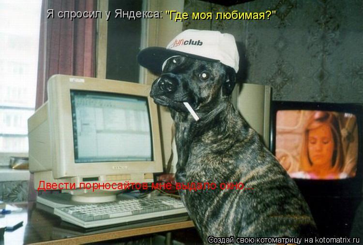 """Котоматрица: Я спросил у Яндекса: """"Где моя любимая?"""" Двести порносайтов мне выдало окно..."""