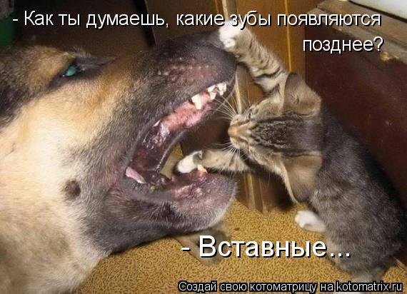 Котоматрица: - Как ты думаешь, какие зубы появляются позднее? - Вставные...