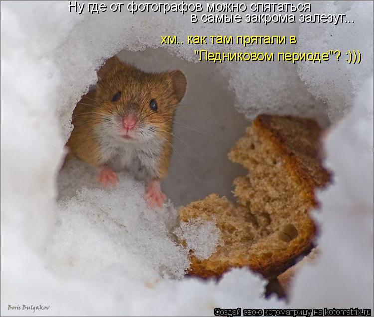 """Котоматрица: Ну где от фотографов можно спятаться в самые закрома залезут... хм.. как там прятали в """"Ледниковом периоде""""? :)))"""