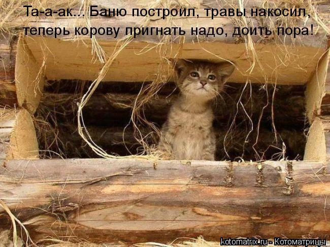 Котоматрица: Та-а-ак... Баню построил, травы накосил,  теперь корову пригнать надо, доить пора!