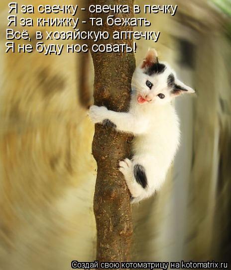 Котоматрица: Я за свечку - свечка в печку Я за книжку - та бежать Всё, в хозяйскую аптечку Я не буду нос совать!
