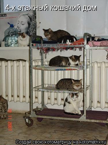 Котоматрица: 4-х этажный кошачий дом