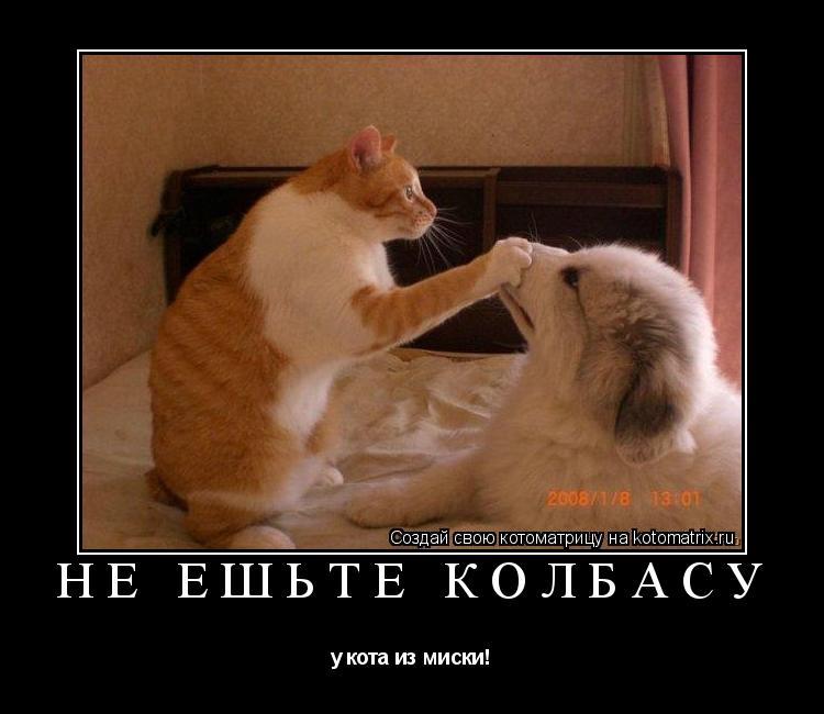Котоматрица: Не ешьте колбасу у кота из миски!