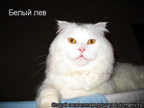 Котоматрица: Белый лев