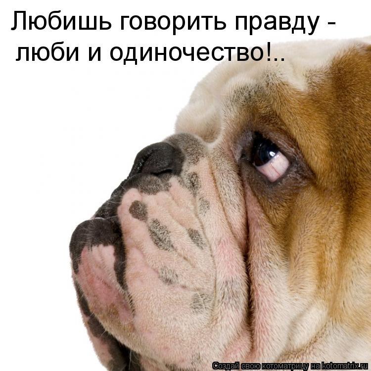 Котоматрица: Любишь говорить правду - люби и одиночество!..