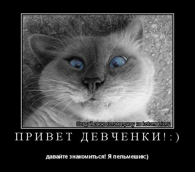 Котоматрица: ПРИВЕТ ДЕВЧЁНКИ!:) давайте знакомиться! Я пельмешик:)