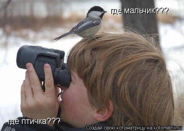 Котоматрица: где мальчик??? где птичка???
