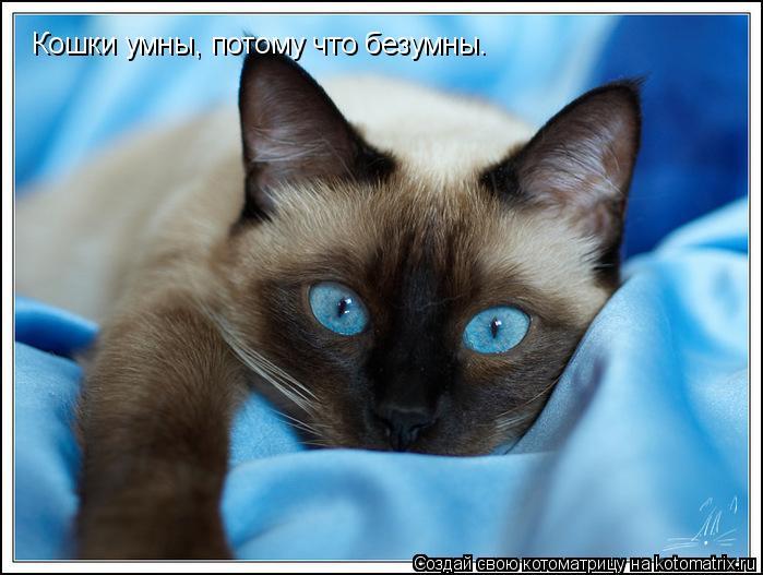 Котоматрица: Кошки умны, потому что безумны.