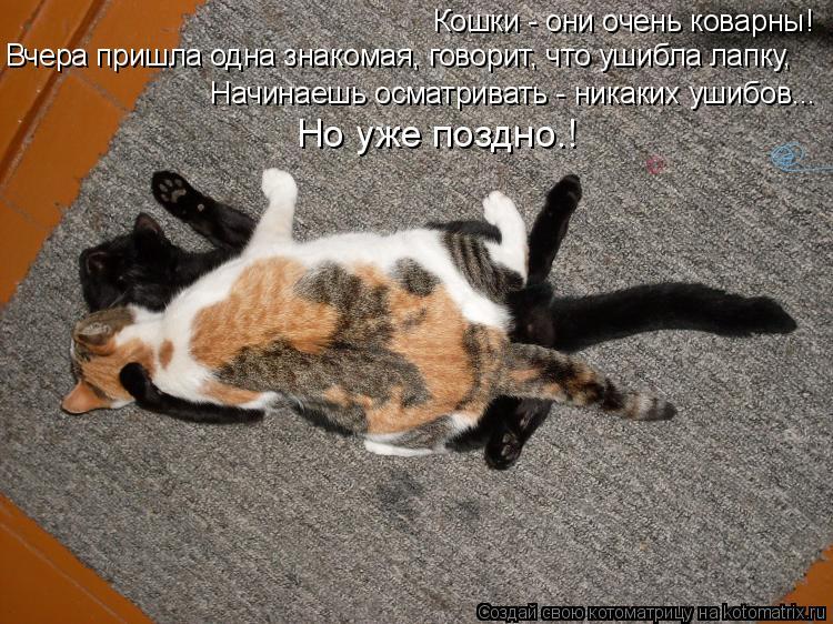 Котоматрица: Кошки - они очень коварны! Начинаешь осматривать - никаких ушибов... Вчера пришла одна знакомая, говорит, что ушибла лапку, Но уже поздно…!