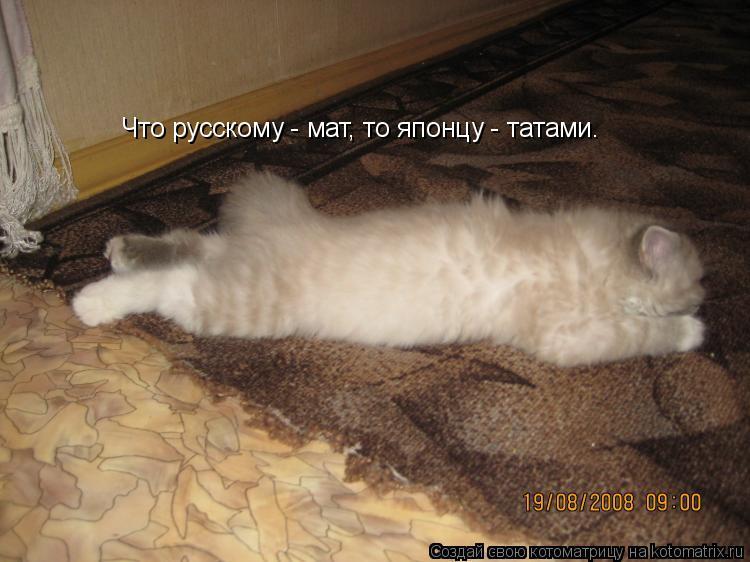 Котоматрица: Что русскому - мат, то японцу - татами.