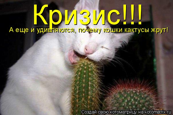 Котоматрица: Кризис!!! А еще и удивляются, почему кошки кактусы жрут!