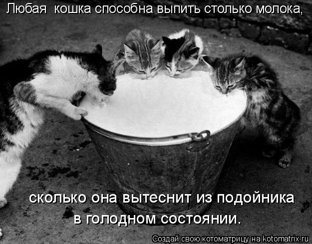 Котоматрица: Любая  кошка способна выпить столько молока,   сколько она вытеснит из подойника  в голодном состоянии.
