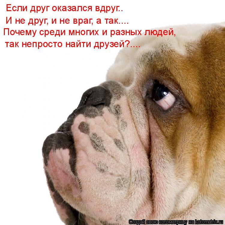 Котоматрица: Если друг оказался вдруг.. Почему среди многих и разных людей,  так непросто найти друзей?.... И не друг, и не враг, а так....