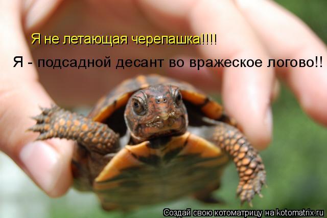 Котоматрица: Я не летающая черепашка!!!!  Я - подсадной десант во вражеское логово!!