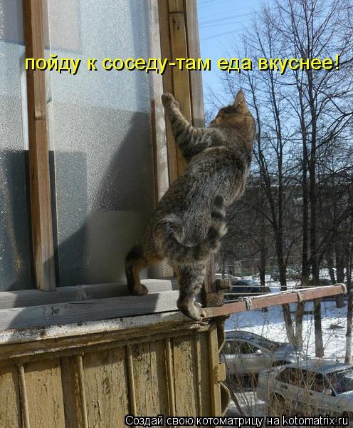 Котоматрица: пойду к соседу-там еда вкуснее!