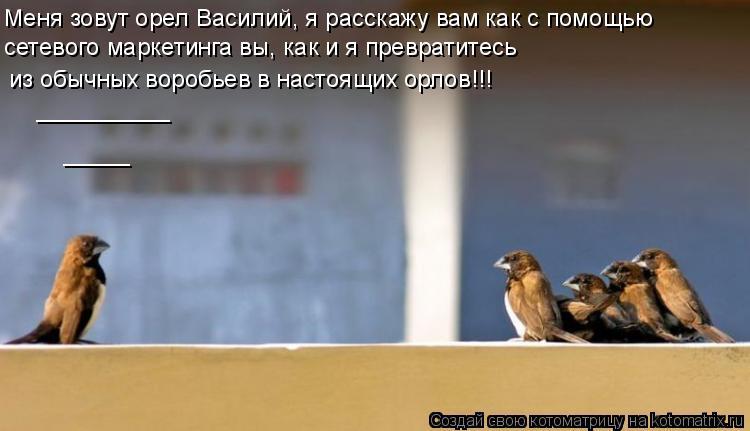 Котоматрица: сетевого маркетинга вы, как и я превратитесь  __________ _____ Меня зовут орел Василий, я расскажу вам как с помощью  из обычных воробьев в настоящи