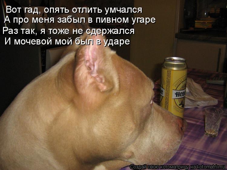 Котоматрица: Вот гад, опять отлить умчался А про меня забыл в пивном угаре Раз так, я тоже не сдержался И мочевой мой был в ударе