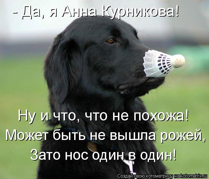 Котоматрица: - Да, я Анна Курникова! Ну и что, что не похожа! Может быть не вышла рожей, Зато нос один в один!