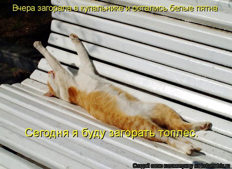 Котоматрица: Сегодня я буду загорать топлес. Вчера загорала в купальнике и остались белые пятна