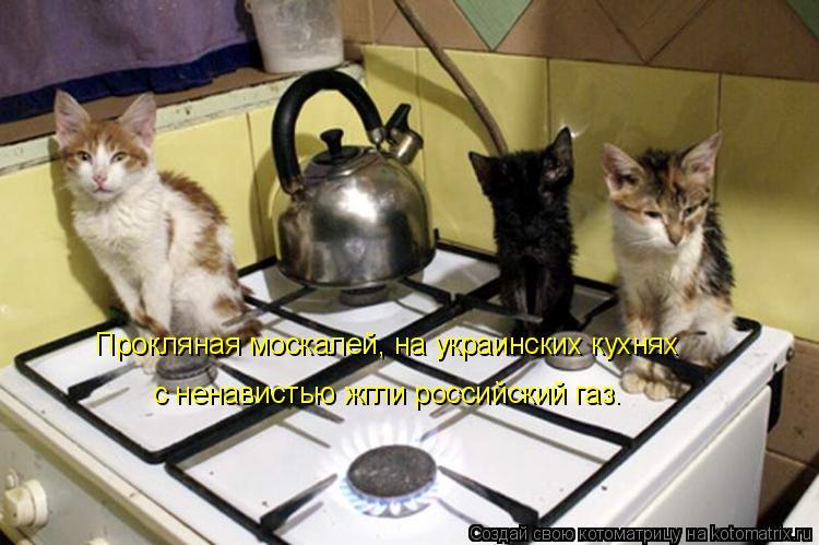 Котоматрица: Прокляная москалей, на украинских кухнях с ненавистью жгли российский газ.
