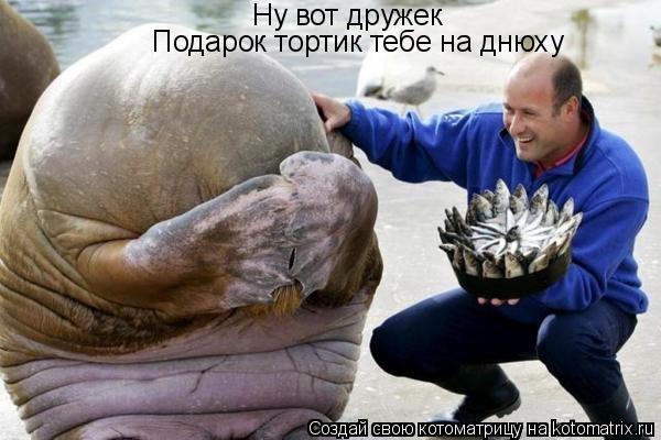 Котоматрица: Ну вот дружек Подарок тортик тебе на днюху