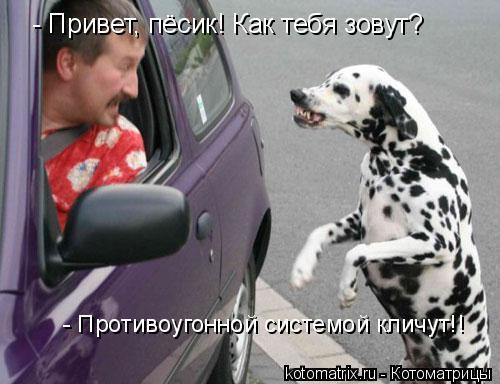 Котоматрица: - Привет, пёсик! Как тебя зовут? - Противоугонной системой кличут!!