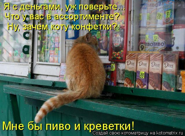 Котоматрица: Я с деньгами, уж поверьте... Что у вас в ассортименте?  Ну, зачем коту конфетки?  Мне бы пиво и креветки!