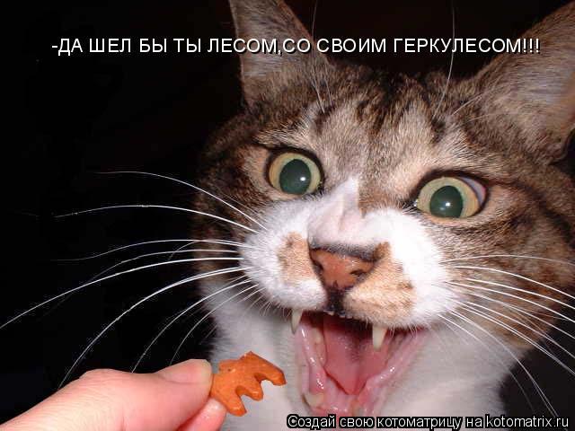Котоматрица: -ДА ШЕЛ БЫ ТЫ ЛЕСОМ,СО СВОИМ ГЕРКУЛЕСОМ!!!