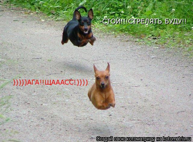 Котоматрица: -СТОЙ!!!СТРЕЛЯТЬ БУДУ!! )))))АГА!!ЩАААСС!))))