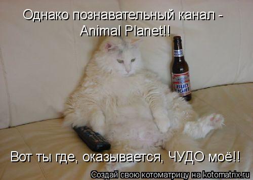 Котоматрица: Однако познавательный канал -  Animal Planet!! Вот ты где, оказывается, ЧУДО моё!!