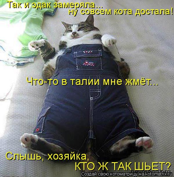 Котоматрица: Так и эдак замеряла... ну совсем кота достала! Что-то в талии мне жмёт... Слышь, хозяйка,  КТО Ж ТАК ШЬЕТ?