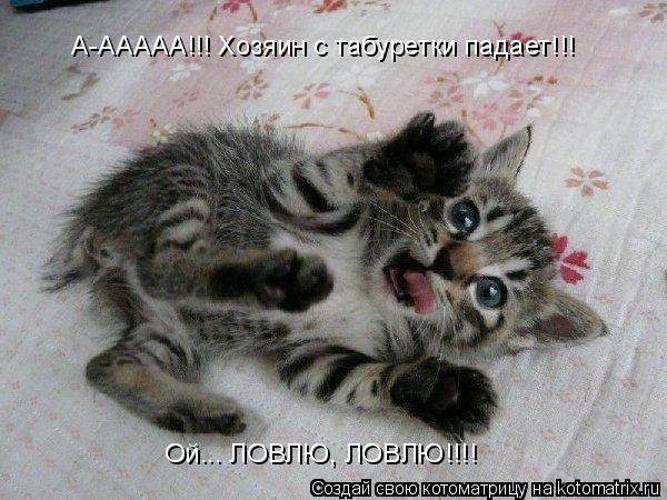 Котоматрица: А-ААААА!!! Хозяин с табуретки падает!!! Ой... ЛОВЛЮ, ЛОВЛЮ!!!!