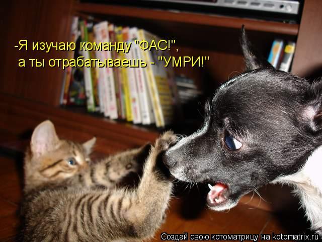 """Котоматрица: -Я изучаю команду """"ФАС!"""", а ты отрабатываешь - """"УМРИ!"""""""