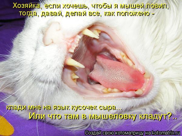 Котоматрица: Хозяйка, если хочешь, чтобы я мышей ловил, тогда, давай, делай все, как положено -  клади мне на язык кусочек сыра...  Или что там в мышеловку кла