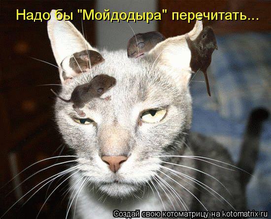 """Котоматрица: Надо бы """"Мойдодыра"""" перечитать..."""