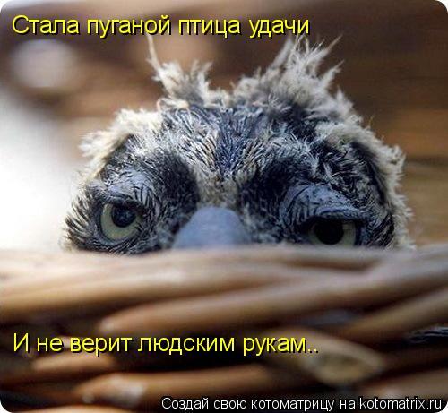Котоматрица: Стала пуганой птица удачи И не верит людским рукам..