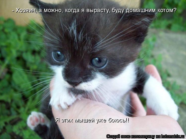 Котоматрица: - Хозяин, а можно, когда я вырасту, буду домашним котом? Я этих мышей уже боюсь!!