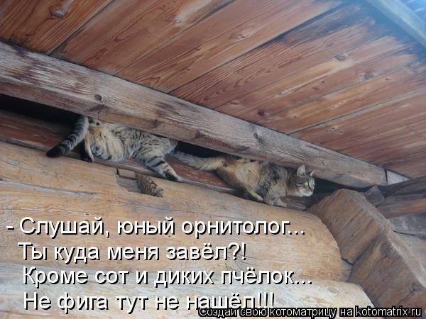 Котоматрица: - Слушай, юный орнитолог... Кроме сот и диких пчёлок... Ты куда меня завёл?! Не фига тут не нашёл!!!