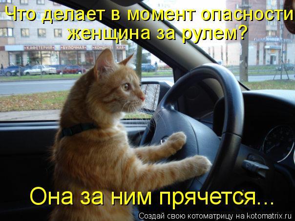 Котоматрица: Что делает в момент опасности   женщина за рулем? Она за ним прячется...