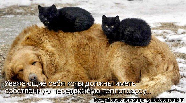Уважающие себя коты должны иметь собственную передвижную теплотрассу...
