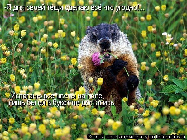 Котоматрица: -Я для своей тёщи сделаю всё что угодно!... ...Испоганю все цветы на поле,  лишь бы ей в букет не достались!