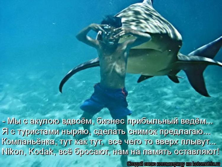 Котоматрица: - Мы с акулою вдвоём, бизнес прибыльный ведём... Nikon, Kodak, всё бросают, нам на память оставляют! Компаньёнка, тут как тут,  все чего то вверх плыв