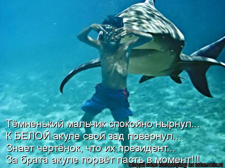 Котоматрица: Тёмненький мальчик спокойно нырнул... К БЕЛОЙ акуле свой зад повернул... Знает чертёнок, что их президент... За брата акуле порвёт пасть в моме